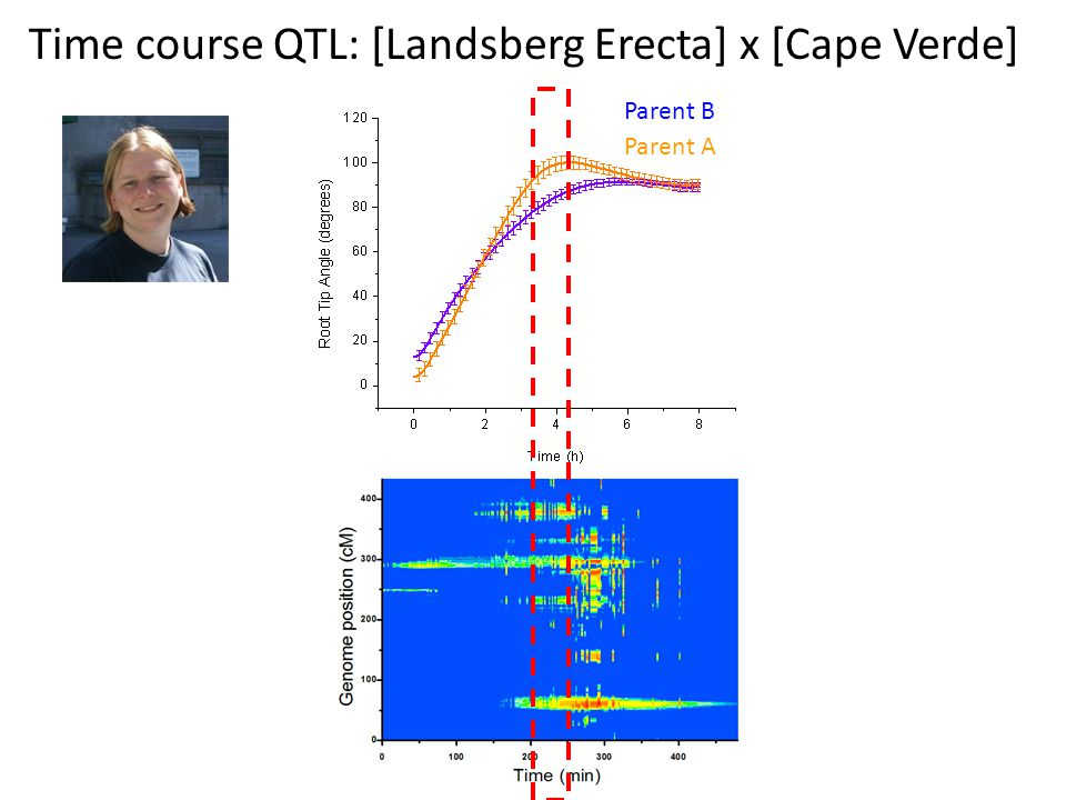 Time course QTL: [Landsberg Erecta] x [Cape Verde]